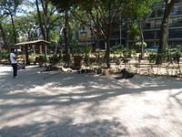 Dogs in Condesa (upscale park, upscale dogs) :-P